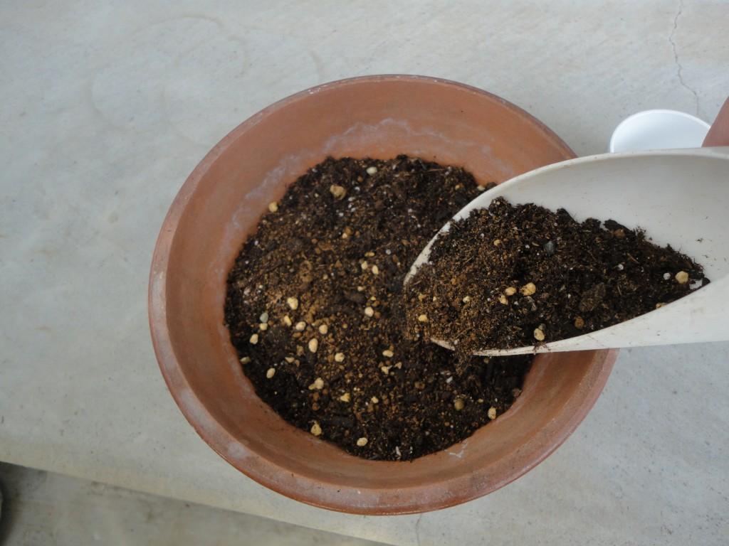 厚み1センチほど土をかけてあげます。