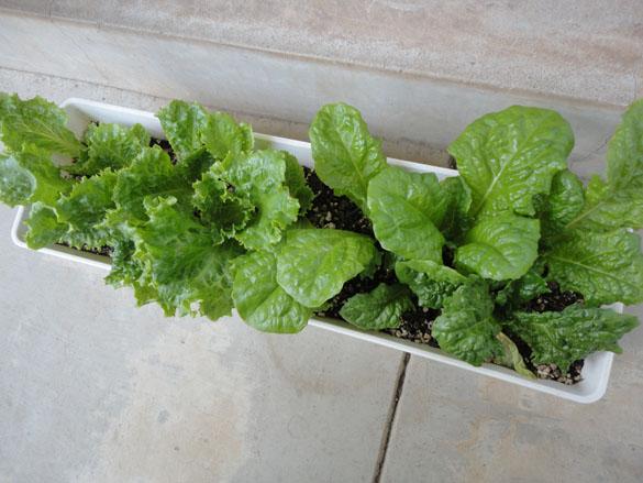 5月といえば、やっぱ植え替えの季節だよね!趣味の植物をご紹介します。